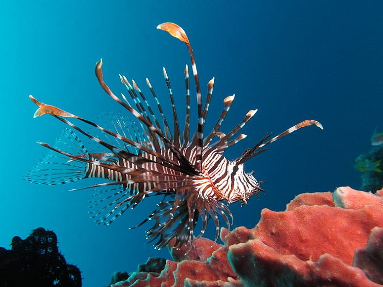 Eat this and Save the Caribbean's Coral Reefs.