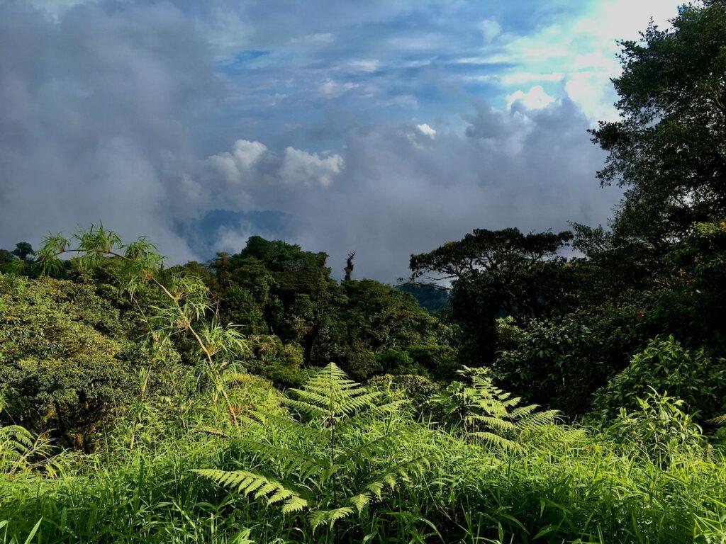 Ecuadorian Amazon Rainforest Conservation